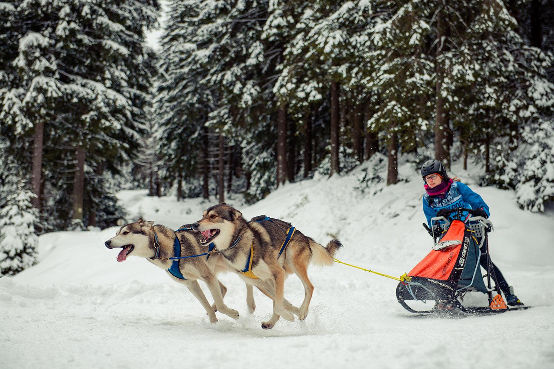 Sprint . Hundeschlittenrennen Frauenwald 2018 (Foto: Jens Gutberlet)